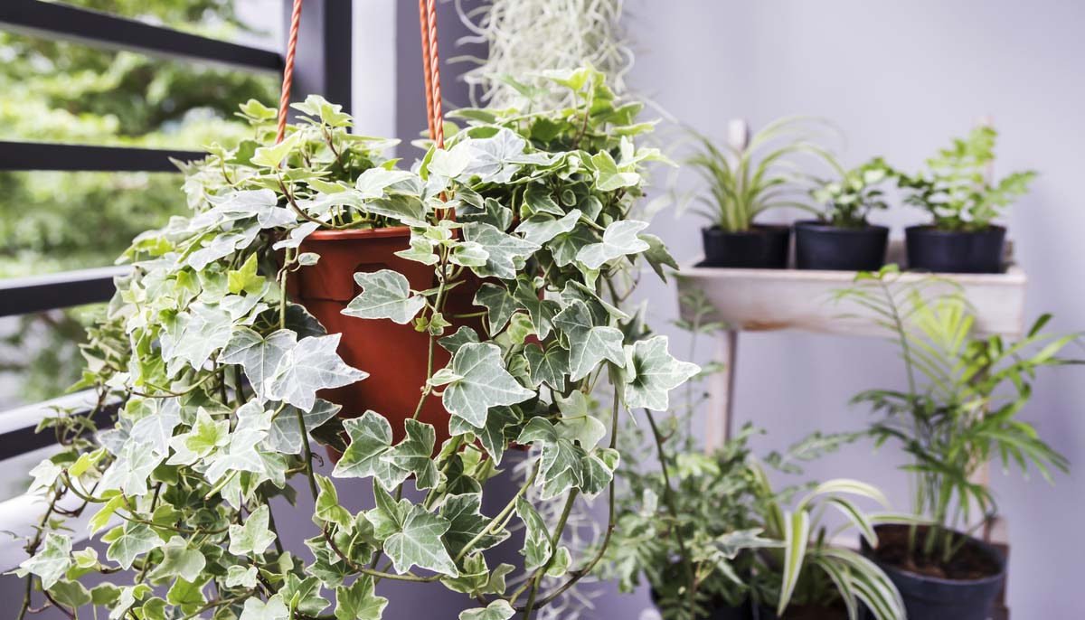 Easy Peasy Houseplants That Are Hard to Kill