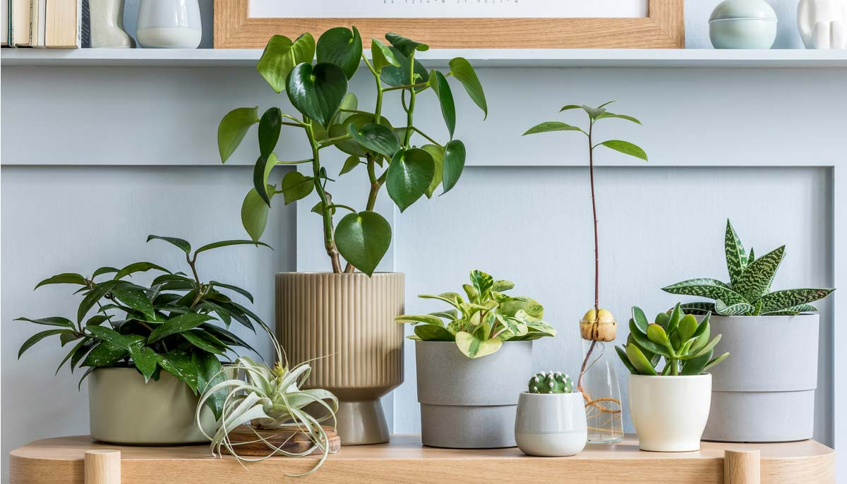 Consider This Before Bringing Home a New Houseplant